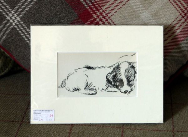 Little Terrier - curled up against chair arm 1930's print by Lucy Dawson - Ter D36